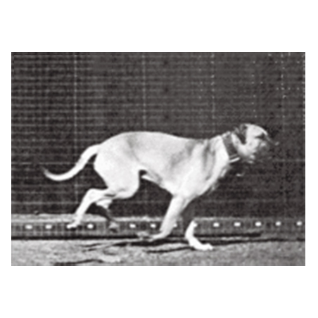Muyenbridge-dog-3d-kaart-1