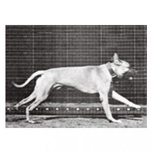 Muyenbridge-dog-3d-kaart